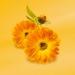 Baby - Calendula Babycreme (Weleda)